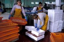 Economie bretonne : Entreprise agroalimentaire