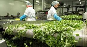 Economie bretonne : méthanisation