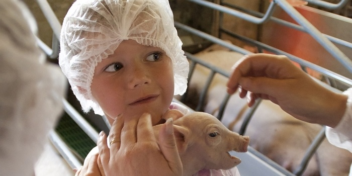 Montrons la réalité de nos élevages